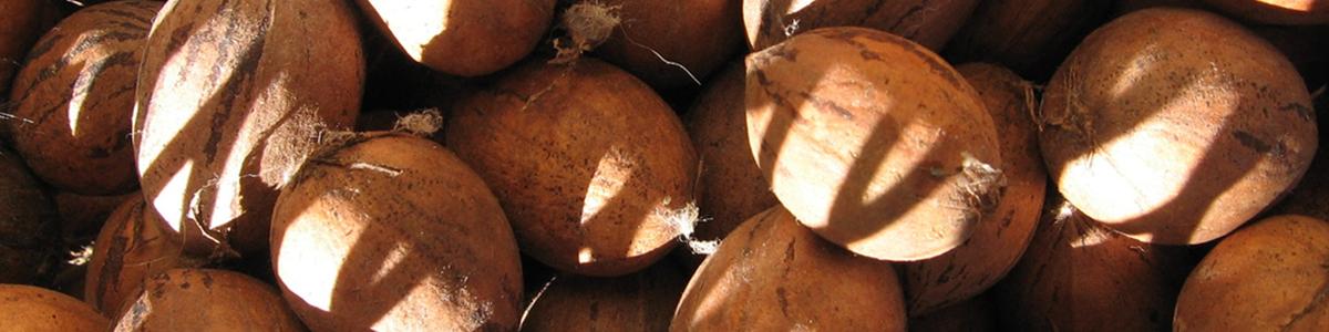 macadamia accueil